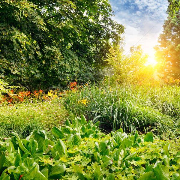 夏 公園 美しい 花壇 空 花 ストックフォト © alinamd