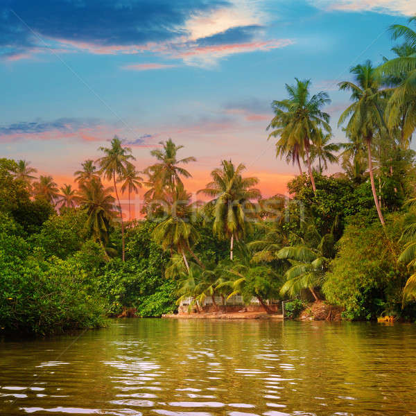 river, beautiful sunrise and tropical palms Stock photo © alinamd