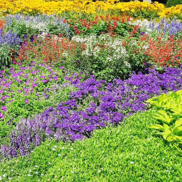Gyönyörű kert virágok tavasz fű tájkép Stock fotó © alinamd
