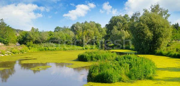 Molhado lago aquático vegetação céu água Foto stock © alinamd