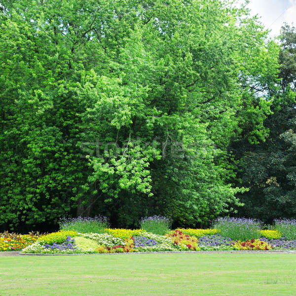 flowerbeds in the park Stock photo © alinamd