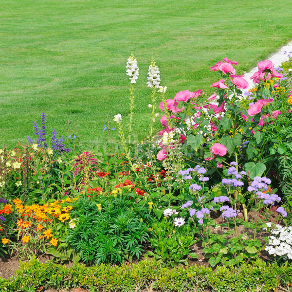 beautiful flower bed and green grass Stock photo © alinamd