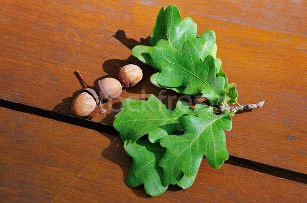 acorns and oak leaves Stock photo © alinamd