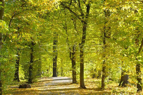 beautiful autumn park with soft sunlight Stock photo © alinamd