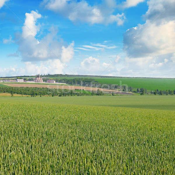 Blue Sky свет облака сельскохозяйственный пейзаж Сток-фото © alinamd