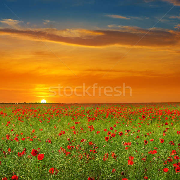Stockfoto: Veld · klaprozen · zonsopgang · agrarisch · landschap · hemel