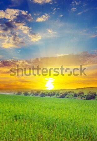 Sunrise Mais Bereich Himmel Wolken Gras Stock foto © alinamd