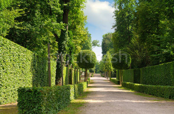 summer park with a beautiful avenue and footpaths Stock photo © alinamd