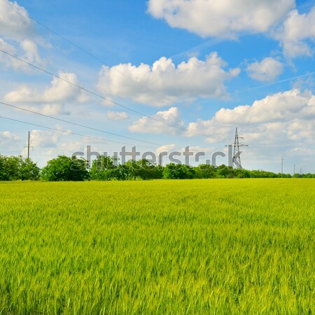 green field and blue sky with light clouds Stock photo © alinamd