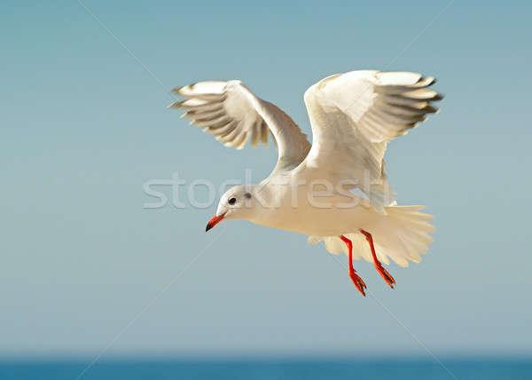 Zeemeeuw vlucht blauwe hemel hemel water schoonheid Stockfoto © alinamd