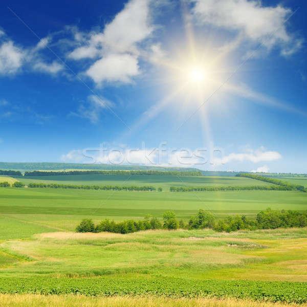 Groene veld zon blauwe hemel voorjaar gras Stockfoto © alinamd