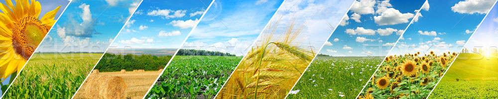 панорамный мнение зеленый области Blue Sky свет Сток-фото © alinamd