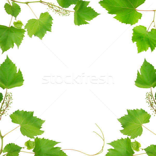 frame made of vine leaves isolated on white background Stock photo © alinamd