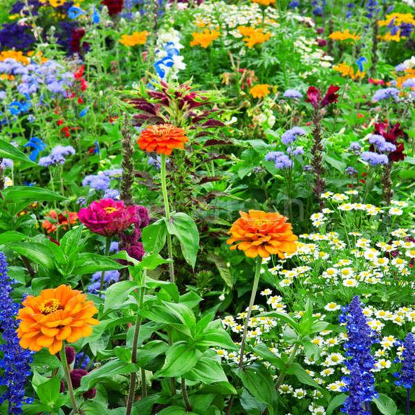 花壇 明るい 花 春 草 庭園 ストックフォト © alinamd