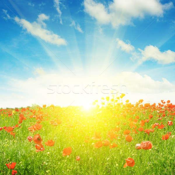 Stockfoto: Veld · klaprozen · zon · blauwe · hemel · hemel · wolken