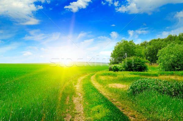 зеленый области солнце Blue Sky облака деревья Сток-фото © alinamd