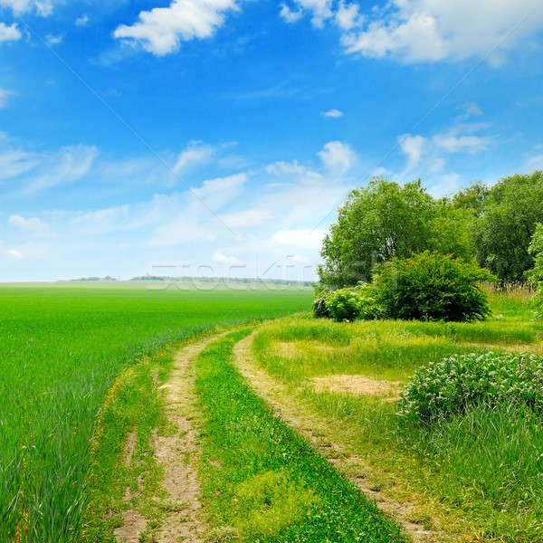 Veld blauwe hemel voorjaar gras weg Stockfoto © alinamd
