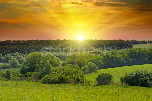 зеленый полях ярко Восход горизонте холмы Сток-фото © alinamd