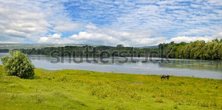 Plain river, meadow and floodplain forest on shore. Stock photo © alinamd