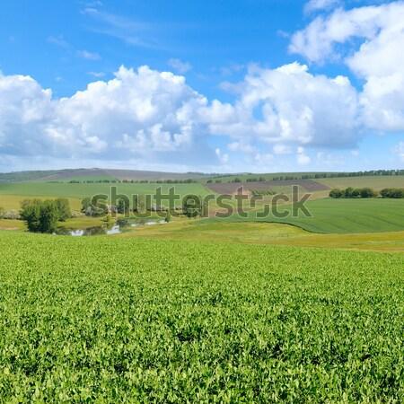 Yeşil alan mavi gökyüzü ışık bulut bulutlar Stok fotoğraf © alinamd