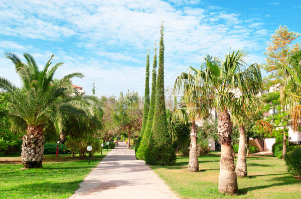 beautiful avenue with palm trees and cypresses Stock photo © alinamd