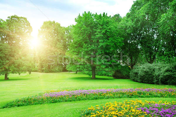Stockfoto: Zonsopgang · mooie · zomer · park · hemel · wolken