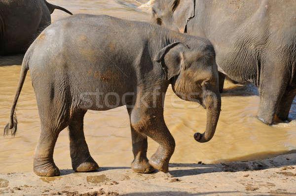 象 赤ちゃん 自然 子 グループ ストックフォト © alinamd