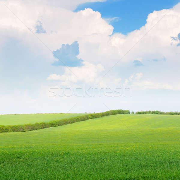 Gyönyörű búzamező kék felhős égbolt felhők Stock fotó © alinamd