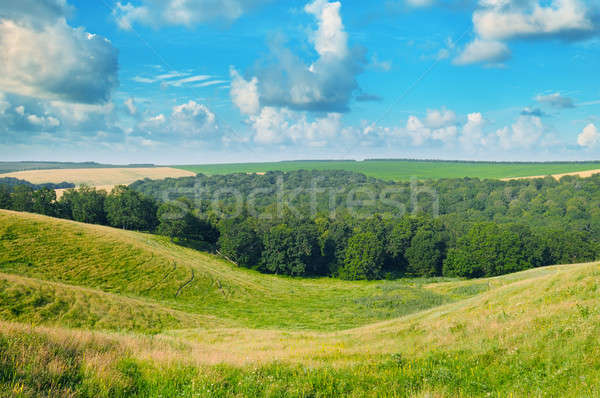 picturesque hills, forest and blue sky Stock photo © alinamd