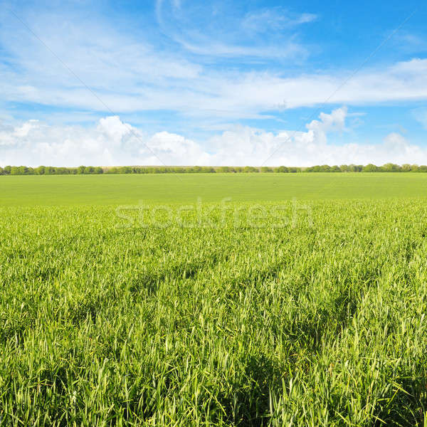 Groene veld blauwe hemel wolken voorjaar gras Stockfoto © alinamd