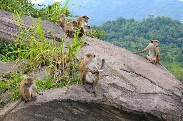 Stock fotó: Család · vad · majmok · arc · fű · gyermek