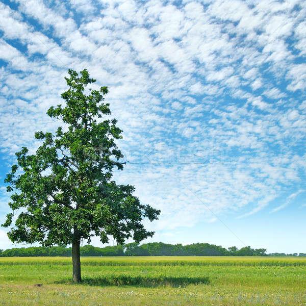 Chêne vert prairie ciel lumière nuages Photo stock © alinamd