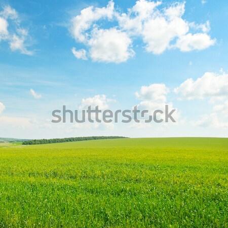Zöld búzamező kék felhős égbolt felhők Stock fotó © alinamd