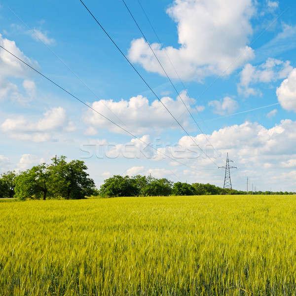 Búzamező kék ég távvezeték felhők tavasz fű Stock fotó © alinamd