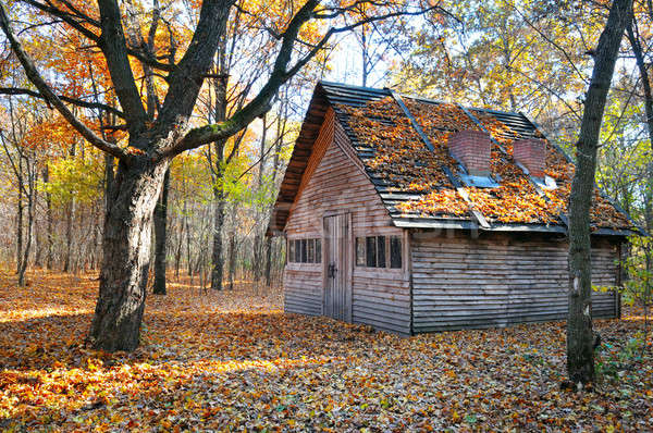 Onderdak mooie najaar bos huis boom Stockfoto © alinamd