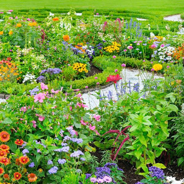 夏天 花坛 绿色 草坪 花卉 春天 商业照片 alinamd