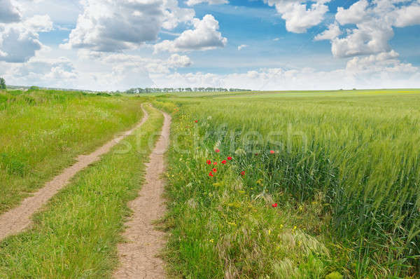 field, country road and a blue sky Stock photo © alinamd