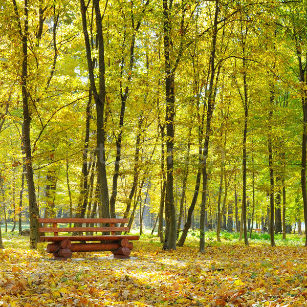 autumn park and bench Stock photo © alinamd