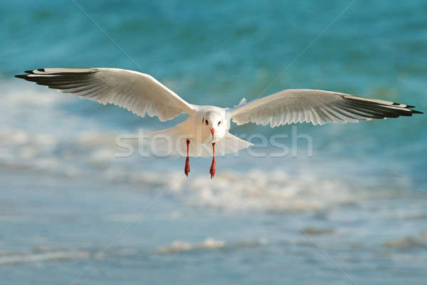 Stock photo: seagull flying over the sea