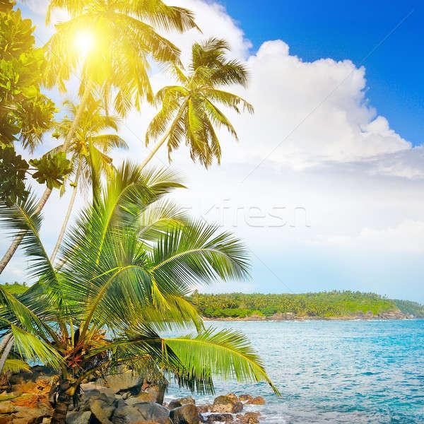 Okyanus tropikal palmiye ağaçları kıyı plaj güneş Stok fotoğraf © alinamd