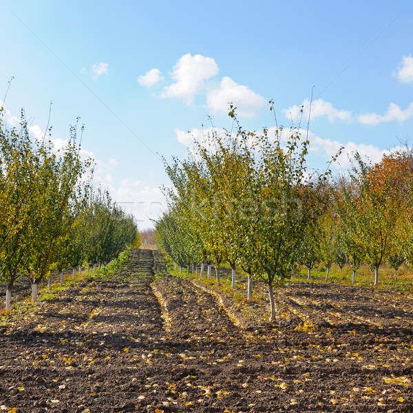 Verger automne récolte arbre feuille fruits Photo stock © alinamd