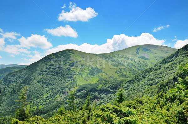 mountains covered trees and blue sky Stock photo © alinamd