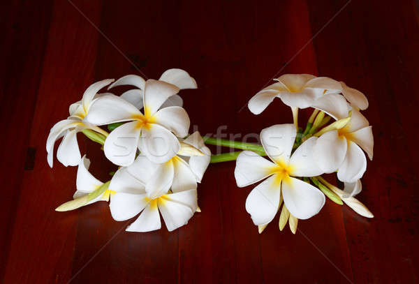 Manolya çiçekler kahverengi bahar doğa yeşil Stok fotoğraf © alinamd