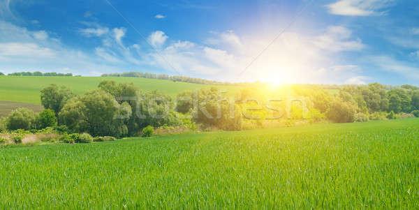 Búzamező napfelkelte kék ég felhők tavasz nap Stock fotó © alinamd