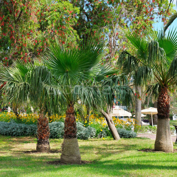 tropical garden with palm trees and lawn Stock photo © alinamd