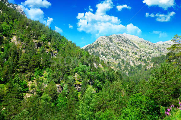 beautiful mountain landscape and blue sky Stock photo © alinamd