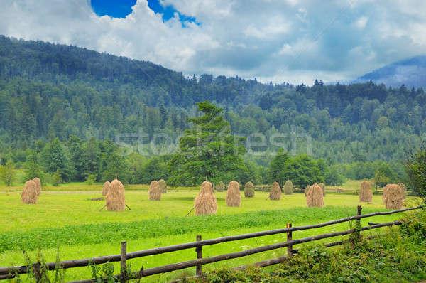 Dağ vadi dağlar çim orman çiftlik Stok fotoğraf © alinamd