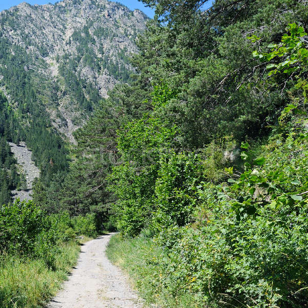 hiking trail through the forest slopes of mountains in summer su Stock photo © alinamd