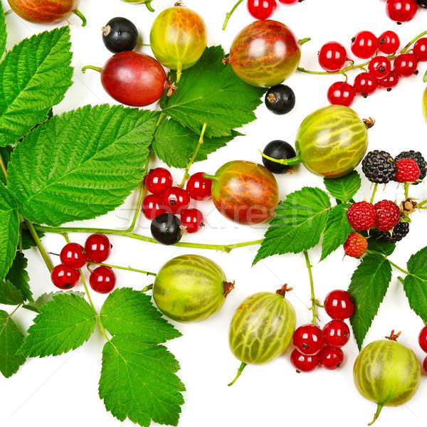 berries black and red currants, gooseberries and blackberries is Stock photo © alinamd