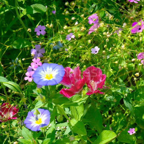 Gyönyörű kert virágok tavasz fű háttér Stock fotó © alinamd